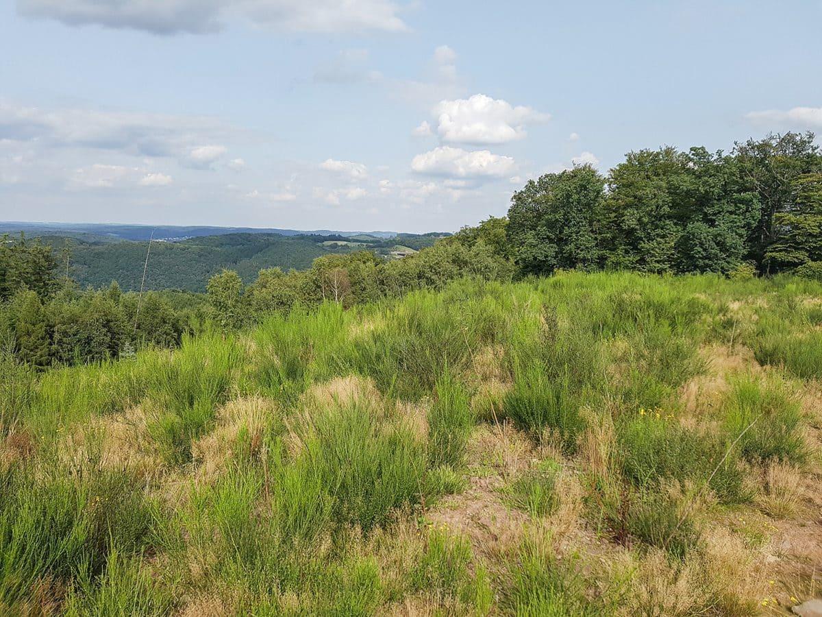 Drei Jahre später im August 2017. Eine Teilfläche mit Pflanzung und natürlicher Sukzession.